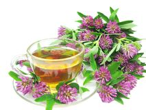 Herbal Tea With Clover Extract Stock Image
