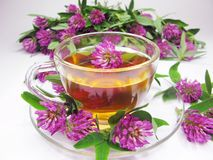 Herbal Tea With Clover Extract Royalty Free Stock Images