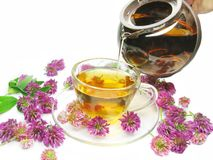Herbal Tea With Clover Flowers Stock Images