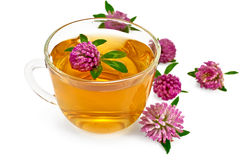 Herbal teas with clover in a glass cup Stock Image