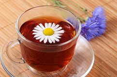 Herbal teas in cup with chamomile Royalty Free Stock Photo