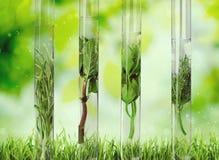 Herbal in test tubes on background. Herbal test tubes image horizontal decoration liquid Stock Image