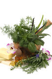 Herbal Therapy Stock Photo
