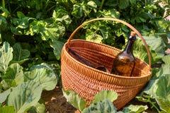 Herbal Tonic Stock Photography