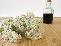 Herbal tonic with yarrow Royalty Free Stock Image