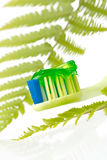 Herbal tooth paste Royalty Free Stock Images