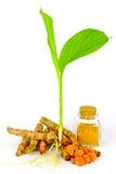 Herbal Turmeric (Curcuma longa L.) root and turmeric powder for alterna Stock Photography