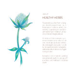 Herbal twig isolated on white. Vector illustration of hand drawn plant - blue flower twig drawn in color pencils isolated on white with place for text block Stock Photos