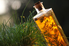 Herbal vinegar Stock Photography