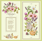 Herbal vintage banner Royalty Free Stock Images