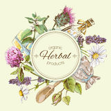 Herbal vintage banner. Vector vintage banner with wild flowers and medicinal herbs. Design for cosmetics, store, beauty salon, natural and organic, health care Royalty Free Stock Photo