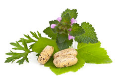 Herbal vitamin and supplement pills with herbs Royalty Free Stock Photography