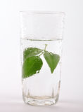 Herbal water Royalty Free Stock Images