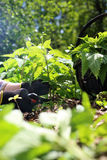 herbalism royalty-vrije stock foto