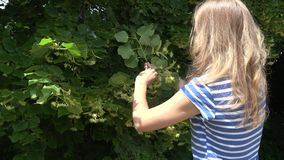 Herbalist blond woman pick linden flowers herbs from tree branches. 4K stock video