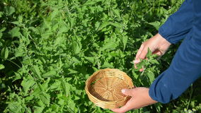 Herbalist hand balm leaf stock footage
