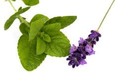 Herbals stockfotografie