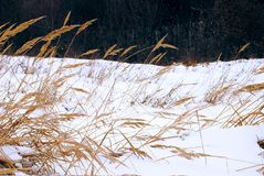 herbares идут снег к Стоковые Изображения