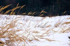 Herbares sobre à neve imagens de stock
