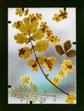 Herbario Foto de archivo libre de regalías