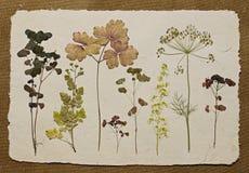 Herbario. Foto de archivo libre de regalías