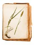 Herbario imagenes de archivo
