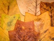 Herbario Fotos de archivo libres de regalías