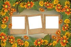 Herbario de flores y de hojas Foto de archivo libre de regalías