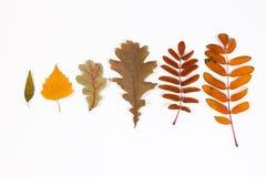 Herbario de las hojas de otoño Foto de archivo