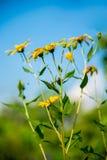 Herbario en el parque Flor amarilla con el cielo azul Imagen de archivo