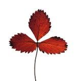 Herbario secado de las plantas Foto de archivo libre de regalías