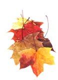 Herbario secado de las plantas Imagen de archivo