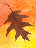 Herbario secado de las plantas Foto de archivo