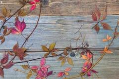 Herbario Todavía vida con las hojas y los troncos secos en los tableros texturizados fotos de archivo