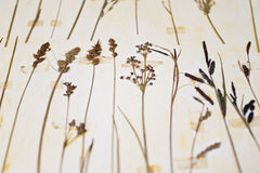 Herbarium Royalty Free Stock Photography