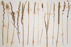 Herbarium stock photos