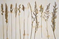 Herbarium royalty free stock image