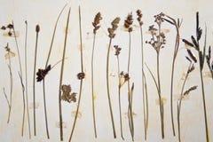 Herbarium Stock Photo