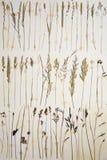 Herbarium Stock Images
