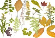 Herbarium. Stock Images
