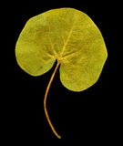Herbarium Royalty Free Stock Photo
