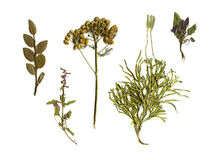 Herbarium. Stock Image