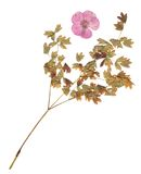 The herbarium. Of the field plants Stock Images