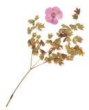 The herbarium Stock Images