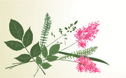 herbarium royaltyfri illustrationer