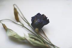 Herbarium royalty-vrije stock foto's