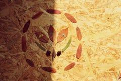 Herbarium obrazy royalty free