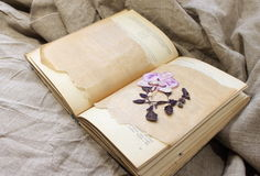 Herbarium in the book. Stock Photography