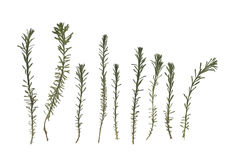Herbarium. Composition of the grass on a white background. stock photography