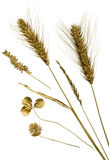 Herbarium do ouro Fotografia de Stock
